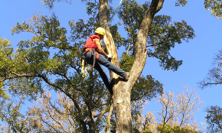 tree maintenance swansea